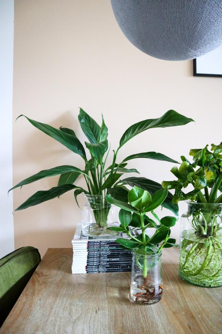 Hydroponie: planten opwater